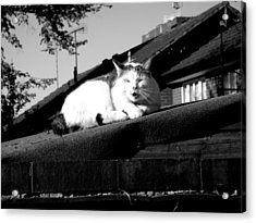 Urban Acrylic Print featuring the photograph Cat Interrupted by Roberto Alamino
