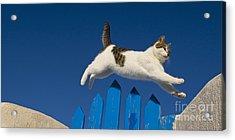 Cat Jumping A Gate Acrylic Print by Jean-Louis Klein & Marie-Luce Hubert