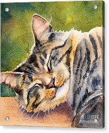 Cat Nap Acrylic Print by Bonnie Rinier