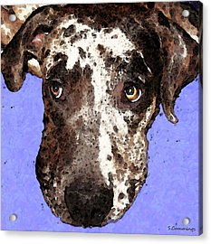 Catahoula Leopard Dog - Soulful Eyes Acrylic Print by Sharon Cummings
