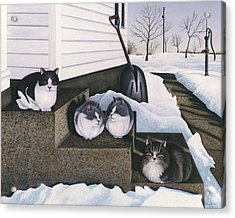 Cats - Jake's Mousers Acrylic Print by Carol Wilson
