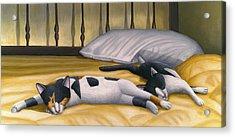 Cats Sleeping On Big Bed Acrylic Print by Carol Wilson