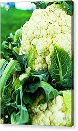 Cauliflower Head Acrylic Print by Teri Virbickis