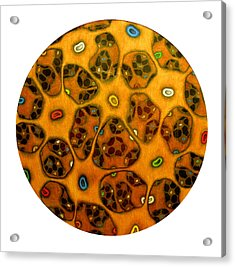 Cell Network Acrylic Print by Nancy Mueller