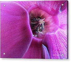 Centre  Of The Flower Acrylic Print by Joyce Woodhouse