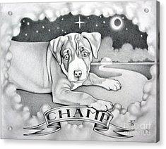 Champ Acrylic Print by Robert Ball