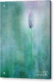 Chandelle Acrylic Print by Priska Wettstein