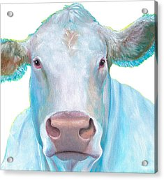Charolais Cow Painting On White Background Acrylic Print by Jan Matson