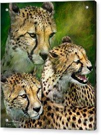 Cheetah Moods Acrylic Print by Carol Cavalaris