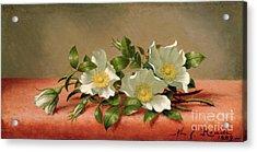 Cherokee Roses Acrylic Print by Martin Johnson Heade