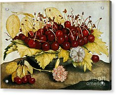 Cherries And Carnations Acrylic Print by Giovanna Garzoni