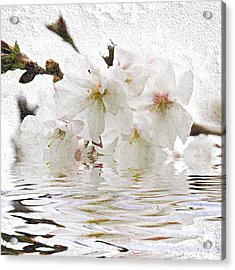 Cherry Blossom In Water Acrylic Print by Elena Elisseeva