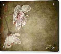 Cherry Blossom Acrylic Print by Meirion Matthias