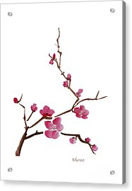 Cherry Blossoms 1 Acrylic Print by McKenzie Leopold