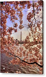 Cherry Blossoms And The Washington Monument Acrylic Print by Lois Bryan