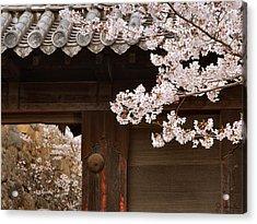 Cherry Blossoms Acrylic Print by Joe Bonita