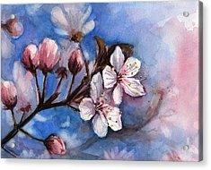 Cherry Blossoms  Acrylic Print by Olga Shvartsur