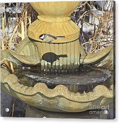 Chickadee-7 Acrylic Print by Robert Pearson