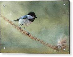 Chickadee At The Shore Acrylic Print by Jai Johnson