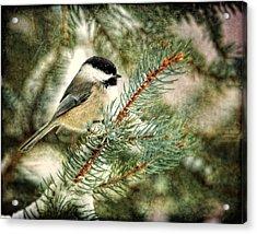 Chickadee On A Snowy Tree Acrylic Print by Al  Mueller