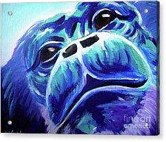 Chimp - Rainforest Dreams Acrylic Print by Alicia VanNoy Call
