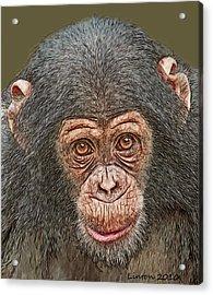 Chimp Portrait Acrylic Print by Larry Linton