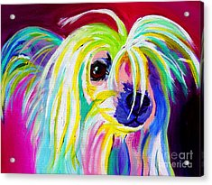 Chinese Crested - Fancy Pants Acrylic Print by Alicia VanNoy Call