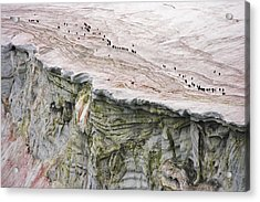 Chinstrap Penguins Crossing An Acrylic Print by Maria Stenzel