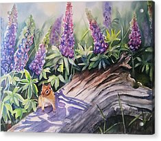 Chipmunk On Log With Lupine Acrylic Print by Patricia Pushaw
