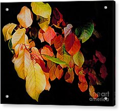 Chokecherry Leaves Acrylic Print by Terril Heilman