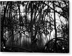 Chokoloskee Mangroves Acrylic Print by Rich Leighton