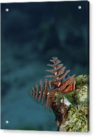 Christmas Tree Worm Lookout Acrylic Print by Jean Noren