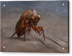 Cicada Shell Acrylic Print by Tom Mc Nemar