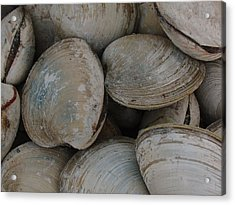 Clam Shells Acrylic Print by Juergen Roth