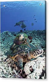 Cleaning Station II Acrylic Print by Dave Fleetham - Printscapes