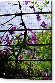 Clematis I Acrylic Print by Anna Villarreal Garbis