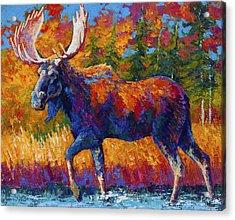 Close Range Acrylic Print by Marion Rose