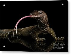 Close-up Varanus Rudicollis Isolated On Black Background Acrylic Print by Sergey Taran