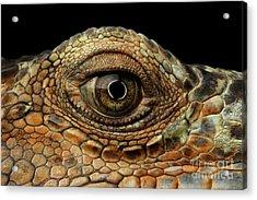 Closeup Eye Of Green Iguana, Looks Like A Dragon Acrylic Print by Sergey Taran