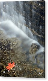 Closeup Maple Leaf And Decew Falls, St Acrylic Print by Darwin Wiggett