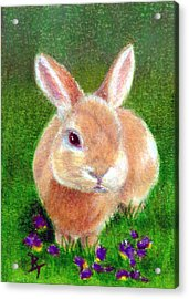 Clover Aceo Acrylic Print by Brenda Thour