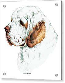 Clumber Spaniel Acrylic Print by Kathleen Sepulveda