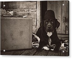 Clyde Acrylic Print by Heather Applegate