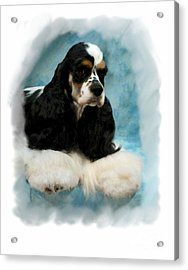 Cocker Spaniel 814 Acrylic Print by Larry Matthews
