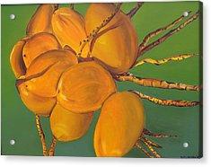 Coconuts Acrylic Print by Katiana Valdes