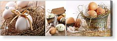 Collage Of Assorted Egg Images  Acrylic Print by Sandra Cunningham