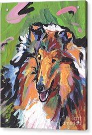 Collie Folly Acrylic Print by Lea S