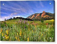 Colorado Wildflowers Acrylic Print by Scott Mahon