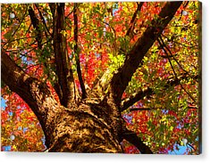 Colorful Autumn Abstract Acrylic Print by James BO  Insogna