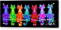 Colorful Calico Cats Acrylic Print by Nick Gustafson